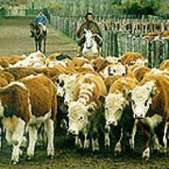 ¿Hacia dónde va la intensificación de la producción de carne?