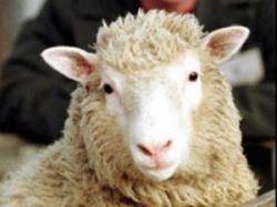 Llamado a productores ovinos