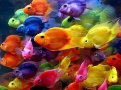 Aumento de temperatura altera personalidad de los peces