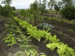 Pese a las lluvias, los cultivos de invierno crecieron