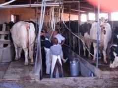 No bajará el precio de la leche al productor