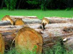 Se afianza exportación forestal