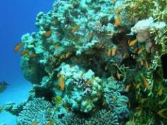 """ONU: destrucción """"irreversible"""" de la biodiversidad"""