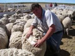 Precios a la baja y poca operativa en lanas