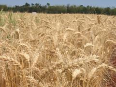 Las exportaciones del nuevo agro uruguayo (audio)