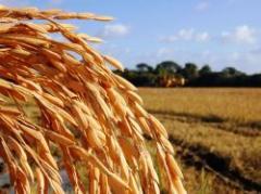 Acuerdo para el precio del arroz