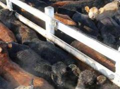Fuerte demanda por ganado en pie