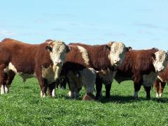 ¿Es posible la relación ganar-ganar en la cadena de la carne? (audio)