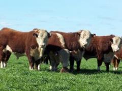 ¿Es posible la relación ganar-ganar en la cadena de la carne?