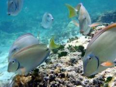 Científicos advierten  sobre extinción de fauna marina