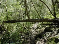 La deforestación disminuye