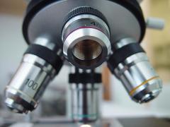 Polémica por fecundación artificial en Alemania