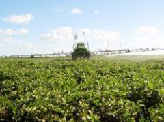 El agro uruguayo: balance 2010 y desafíos futuros