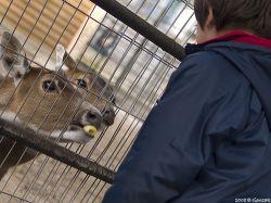 Liberan animales del zoológico de Minas