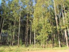 La forestación y su relación con los demás rubros del agro