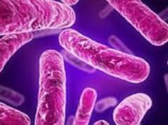 Descienden casos y muertes por tuberculosis en el mundo