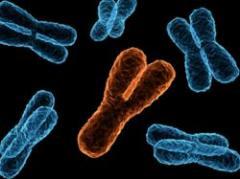Crece riesgo de infarto si varía cromosoma masculino Y