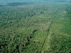 Brasil: policía especializada combatirá la deforestación