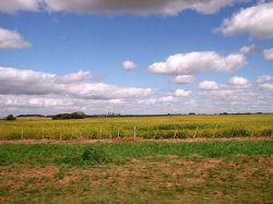 IRAE: más de 3.000 empresas del agro presentaron fallas