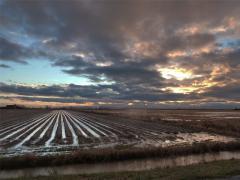 Uruguay es líder en investigación agropecuaria