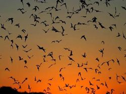 EEUU construye búnker para salvar a sus murciélagos