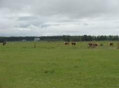 Prevén crecimiento de 2.9% de sector agropecuario en 2013