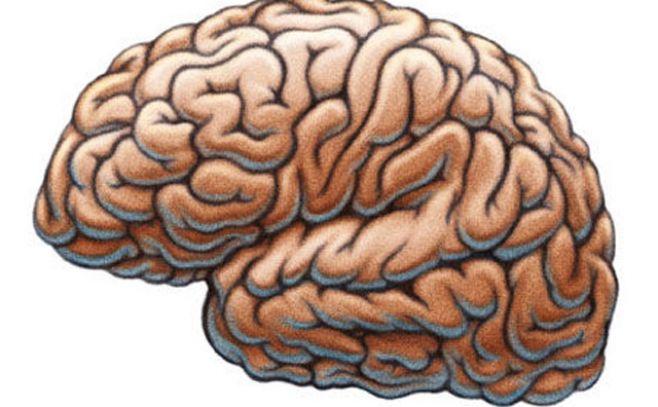 """""""Las personas terminan de tener cerebro adulto a los 25"""""""