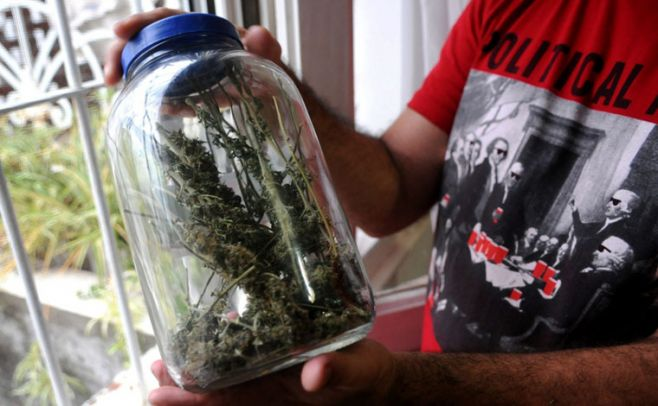 Cerca de 400 inscripciones para cultivo doméstico de marihuana