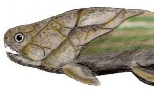 Descubren origen del sexo gracias a peces prehistóricos