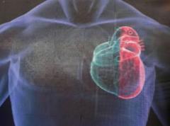 Encuentran posible clave para curar enfermedades cardíacas