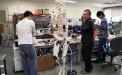 """Desarrollan robots con músculos """"humanos"""""""