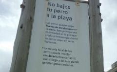 Un decreto de la Junta Departamental de Montevideo prohíbe el ingreso de mascotas a las playas durante todo el año
