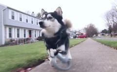 Perro corre por primera vez con piernas de impresora 3D