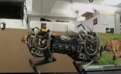 Robots podrán correr como guepardos