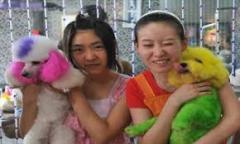 Las mascotas en China