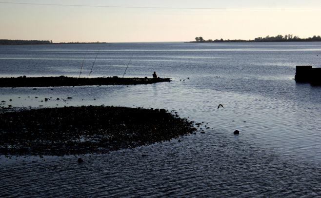 Dinama: cultivos no respetan distancia exigida de cursos de agua