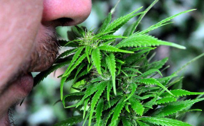 """Documental explica el """"porqué"""" de legalización del cannabis"""