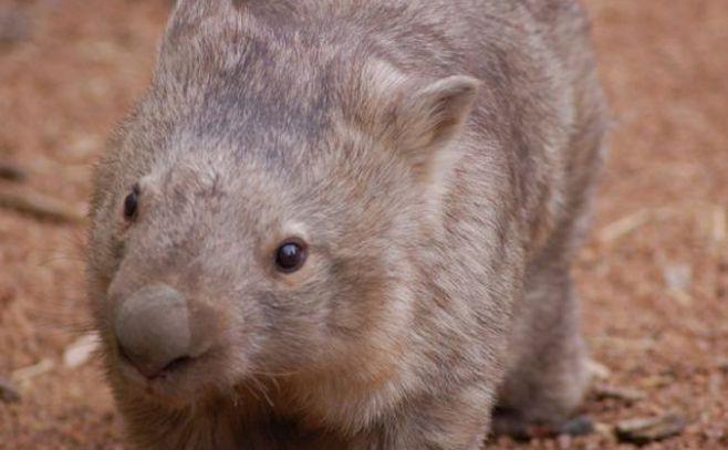 Diez especies en peligro de extincion - Info - Taringa!