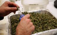 ICCorp y Simbiosys inician producción de marihuana