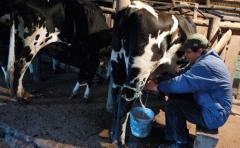 Deuda con productores de leche asciende a 93 millones de dólares