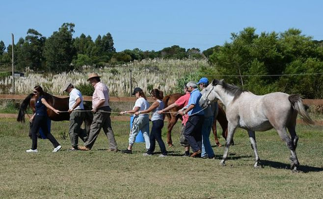 Coherencia, coaching con caballos..