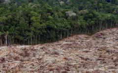 FAO urge a países de América Latina a reducir deforestación