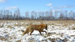 Chernobil: Â¿Reserva natural o zona de industrias?
