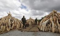 "Kenia quema 105 toneladas de ""oro blanco"""