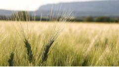 "Argentina: ""importaría 200.000 toneladas de trigo"""