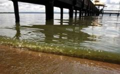 Descubren un grupo bacteriano que ayuda a regular el clima