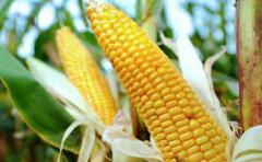 Bayer confirma oferta para comprar la polémica Monsanto