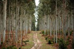 América Latina busca acabar con la tala ilegal de madera