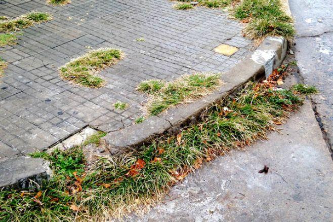 Usan glifosato en espacios públicos pese a advertencias de especialistas