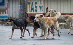 Gobierno proyecta documento para registrar tenencia de perros
